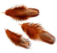 Перья фазана Декоративные (Перо) Оранжевые 4-7 см 10 шт/уп, фото 1