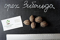 Орех Зибольда семена (10 штук) орех айлантолистный для саженцев, Júglans ailanthifolia горіх зібольда насіння