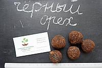 Орех Чёрный семена (10 штук) Juglans nigra для саженцев, горіх чорний насіння, родственник грецкого, фото 1