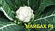 Семена капусты Майбах F1 \ Maybah F1  2500 семян Clause, фото 2