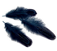 Перья фазана Декоративные (Перо) Неви синие оптом 4-7 см 10 шт/уп, фото 1