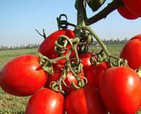 Насіння томату Ліона F1 (5000н)