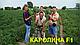 Семена арбуза Каролина Clause 1000 семян, фото 3