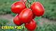 Семена томата Стелларед F1 \ Stellared F1 25000 семян Clause , фото 2