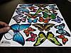 Наклейки бабочки самоклеющиеся для украшения дома, фото 5