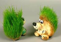 Травянчик Ежик сидячий