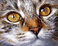 Картина по номерам 40×50 см. Кошачья мордочка Художник Елена Колотуша