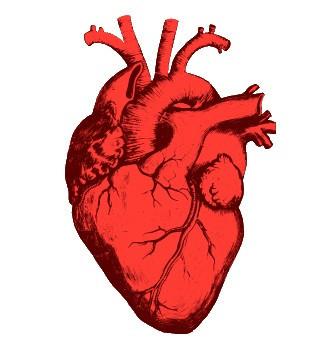 Товары для лечения сердца и сосудов