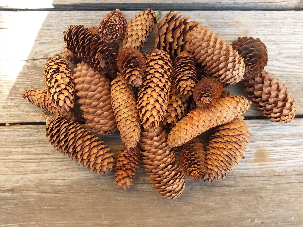 Шишки ели натуральные маленькие размер ок.5 см, 25 шт, 50 грн