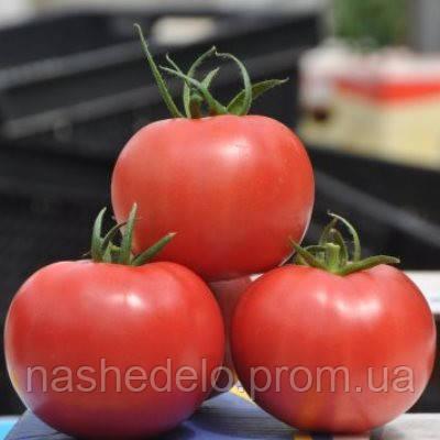Пинк клер Ф1 500 сем. томат Никерсон (Хазера)