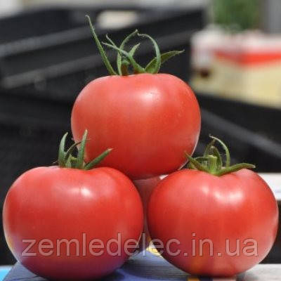 Семена томата Пинк Клер F1 500 семян Hazera