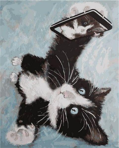 Картины по номерам 40×50 см. Селфи-кот