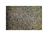 Семена Антипки (Насіння), фото 1