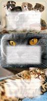 Наклейки на тетради Кошки