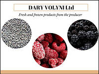 dary_volyni_berry_producer.jpg