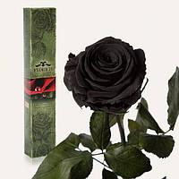 Долгосвежая роза Черный Бриллиант 7 карат (короткий стебель)