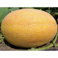 Семена Дыни 0,5 кг сорт Алушта
