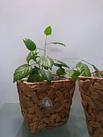 Плетенное кашпо для вазонов! Декорируйте дом с удовольствием!, фото 1