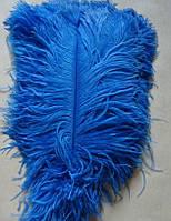 Перо страуса.Цвет Синий.Размер 40-45cм. Цена за 1шт.