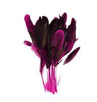 Перья петуха на ножке декоративные (Перо) Фуксия с черным 10-15 см оптом 10 шт/уп