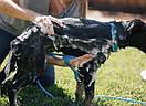 Перчатка-душ для купания домашних питомцев | Щетка для животных AQUAPAW, фото 5