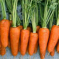 Семена моркови Комет 0,5 кг. Hazera
