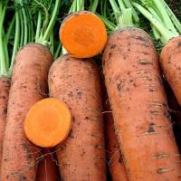 Флакки-3 Гиганта 0,5 кг. морковь Никерсон (Хазера)