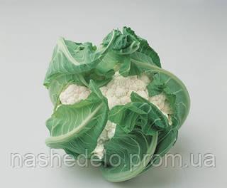 Семена цветной капусты Локрис F1 1000 семян Vilmorin