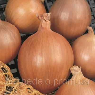 Семена лука репчатого Бургос F1 250 000 семян Vilmorin
