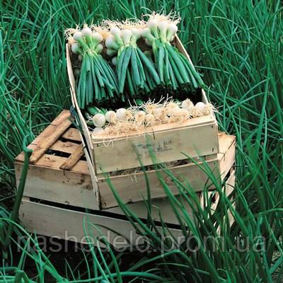 Семена лука на перо Де Барлета 250 гр. Vilmorin