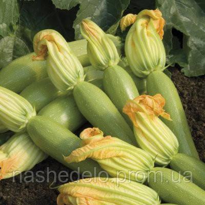 Семена кабачка Невира F1 250 семян Vilmorin