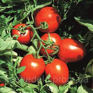Семена томата сливовидного Сурия F1 1000 семян Vilmorin