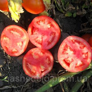 Семена томата Трибека F1 1000 семян Vilmorin