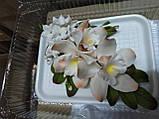 Букет орхідеї великої з листками і дзвіночками L 250, фото 2