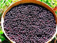 Черника сушеная (ягоды) чорниця сушена
