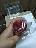 Троянди середні d-55, фото 7