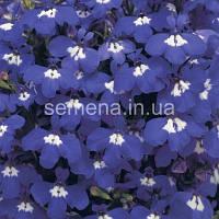 Лобелія Рівєра 200 шт (колір на вибір)