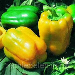 Семена сладкого перца Серено F1 250 семян Vilmorin
