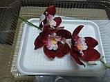 Гілка орхідеї великої з бутонами L 250, фото 4
