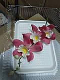 Гілка орхідеї великої з бутонами L 250, фото 5