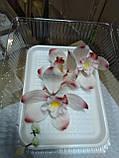 Гілка орхідеї великої з бутонами L 250, фото 3