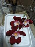 Гілка орхідеї великої з бутонами L 250, фото 6