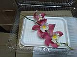 Гілка орхідеї великої з бутонами L 250, фото 7