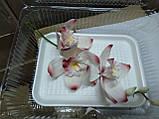Гілка орхідеї великої з бутонами L 250, фото 9