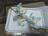 Гілка орхідеї великої з бутонами L 250, фото 10