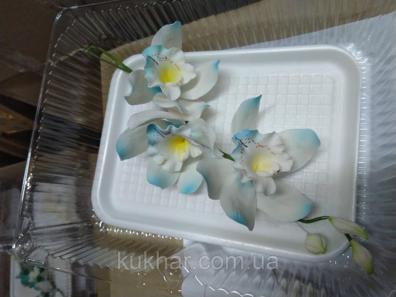 Гілка орхідеї великої з бутонами L 250