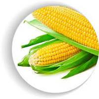 Сахарная кукуруза Венеция F1 4000шт