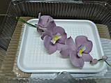 Гілка орхідеї малої з бутонами L 250, фото 2