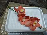 Гілка орхідеї малої з бутонами L 250, фото 3