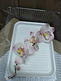 Гілка орхідеї малої з бутонами L 250, фото 4